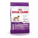 Royal Canin GIANT Puppy Active (Сухой корм Роял Канин для крупных щенков с высоой энергетической активностью)