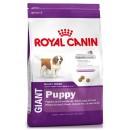 Royal Canin GIANT Puppy (Сухой корм Роял Канин для крупных щенков в возрасте от 2 до 8 месяцев)